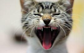 The Purr-fect Cat Quiz!