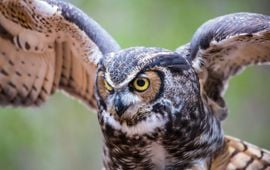 Take Our Owlfully Challenging Owl Quiz!