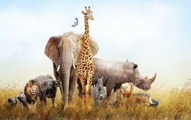 Quiz: What Animal Am I?